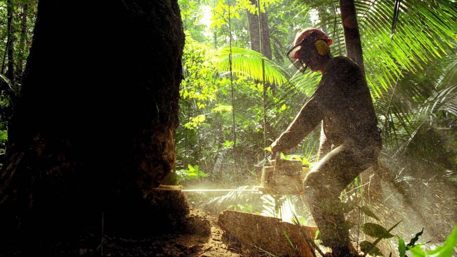 Сеч в Амазонската гора