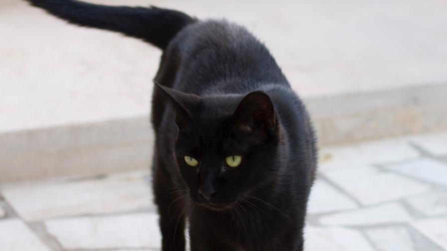 Чипират черните котки у нас като мярка срещу лошия късмет