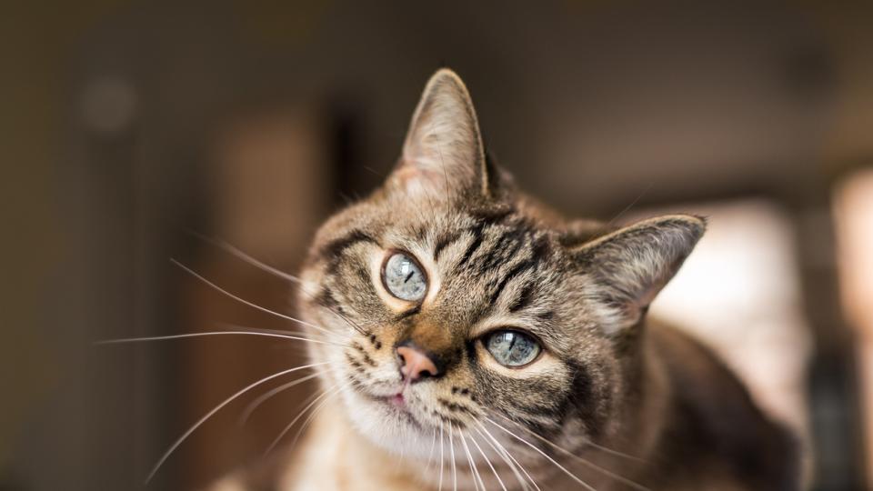котка животно