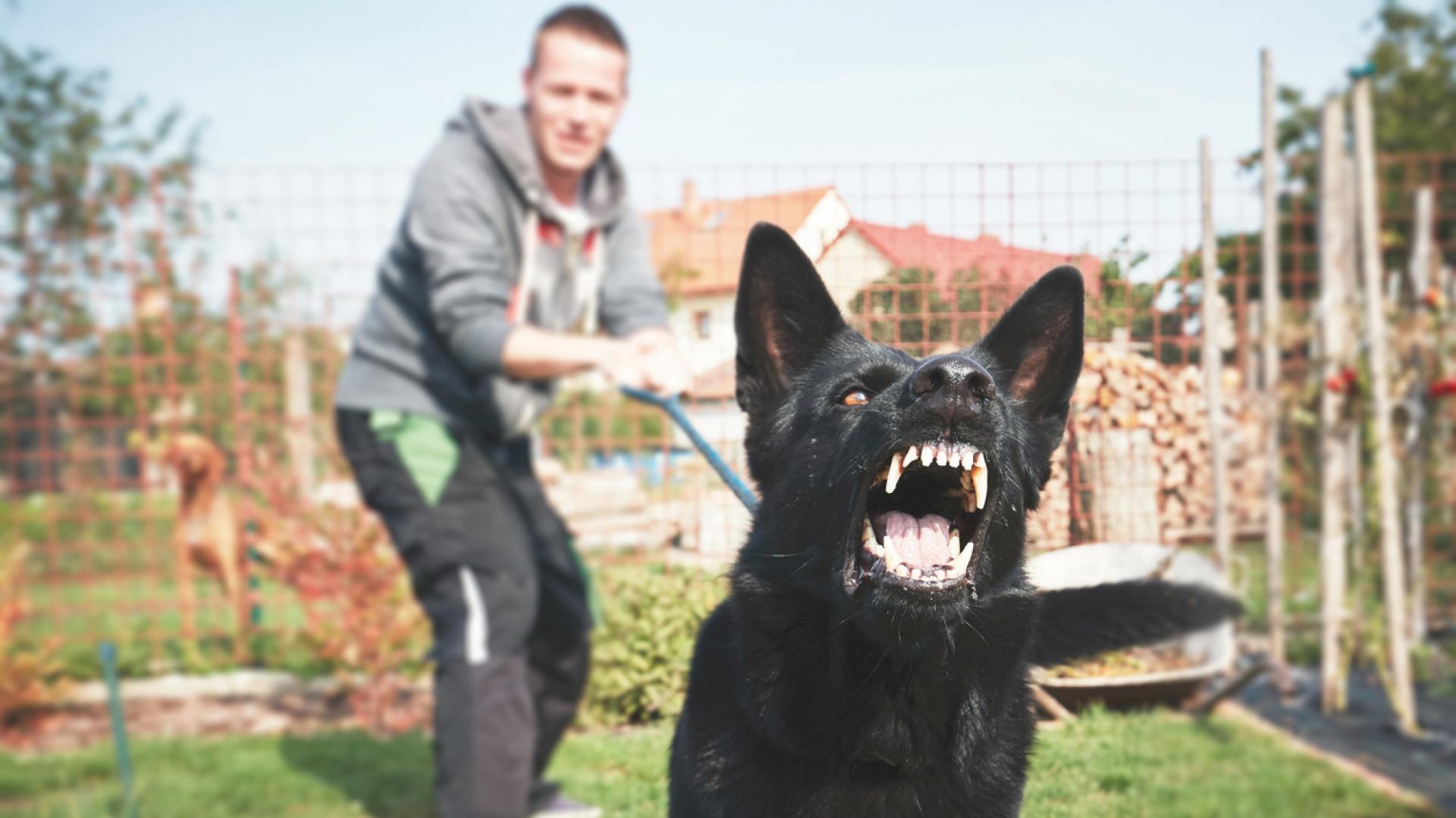Могат ли кучетата да надушват страха?