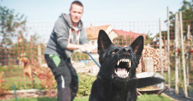 Любопитно Могат ли кучетата да надушват страха? Страхът не провокира