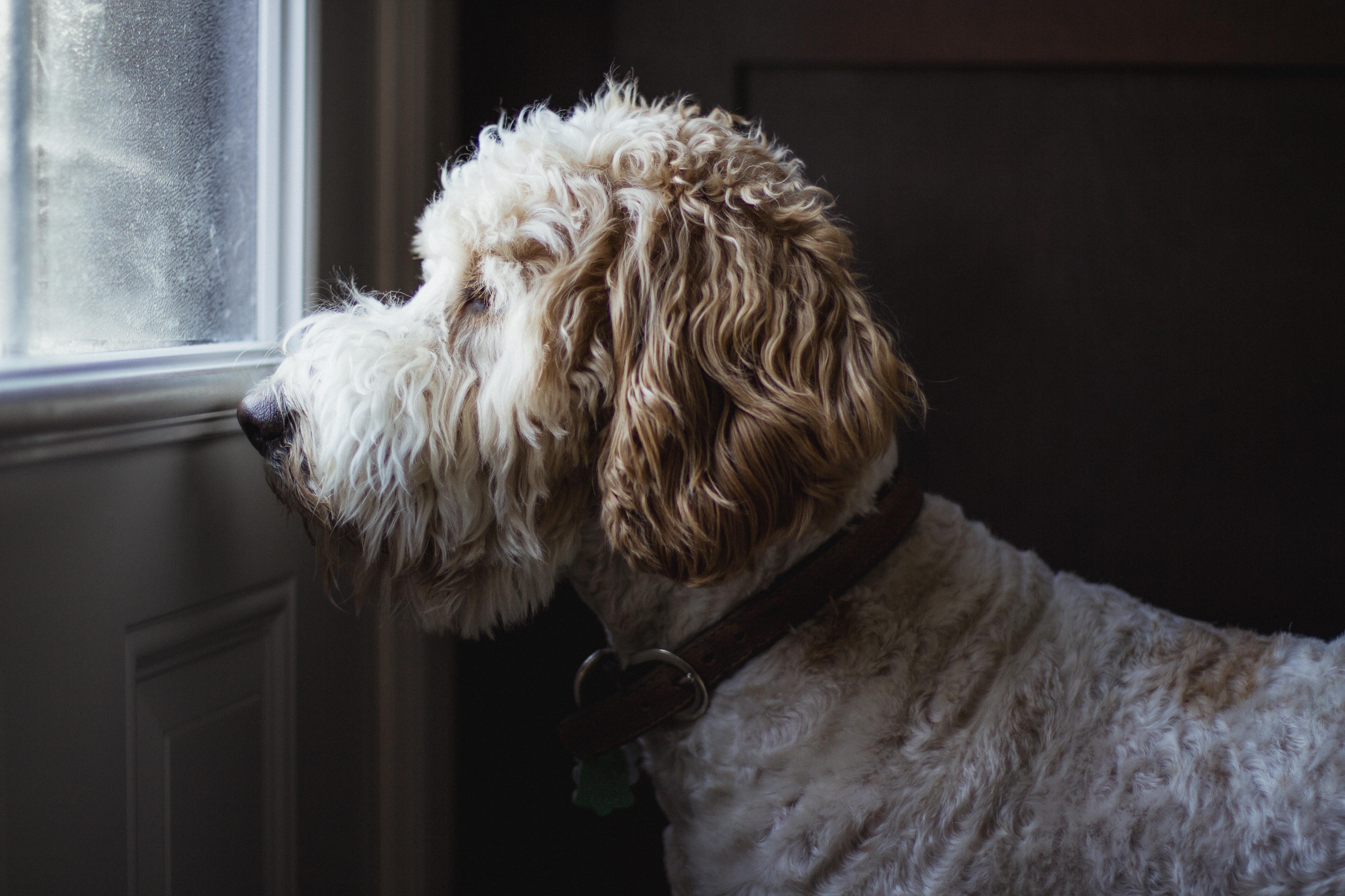 <p><strong>Iktsuarpok</strong> (инуитски)</p>  <p>Чувството, когато нетърпеливо очакваме гост &ndash; гледаме през прозореца, проверяваме си телефона, чакаме до вратата.</p>