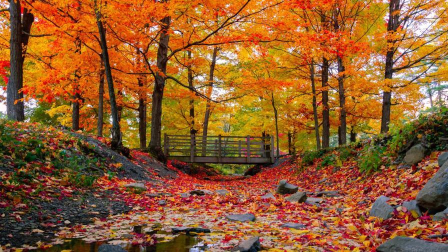 Шареният чар на есента