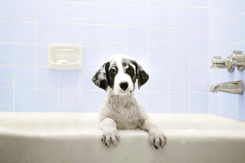 куче вана