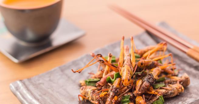 Любопитно Експерт: Насекомите са храната на бъдещето Въпрос на време