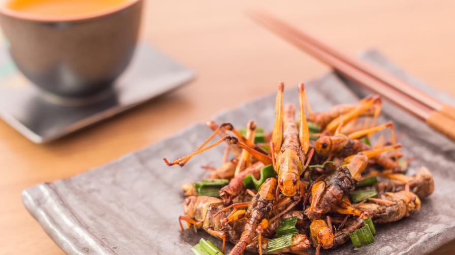 Експерт: Насекомите са храната на бъдещето