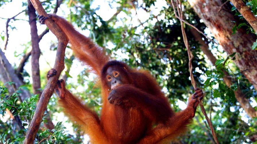 Най-щурите снимки на диви животни