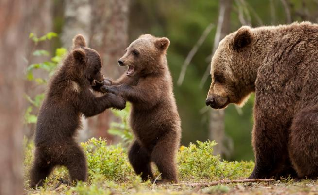 Вижте най-щурите снимки на диви животни за 2019 г.