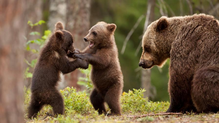 <p>Вижте <strong>най-щурите снимки </strong>на диви животни за 2019 г.</p>