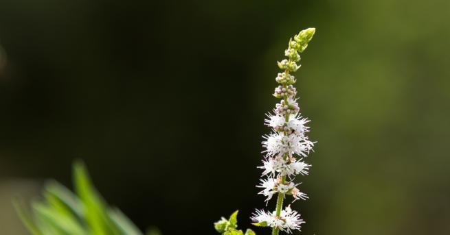 В народната медицина има много билки, които помагат на жените