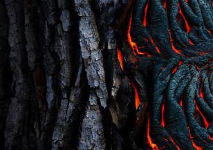 Вижте как изглежда ударено от мълния дърво отвътре