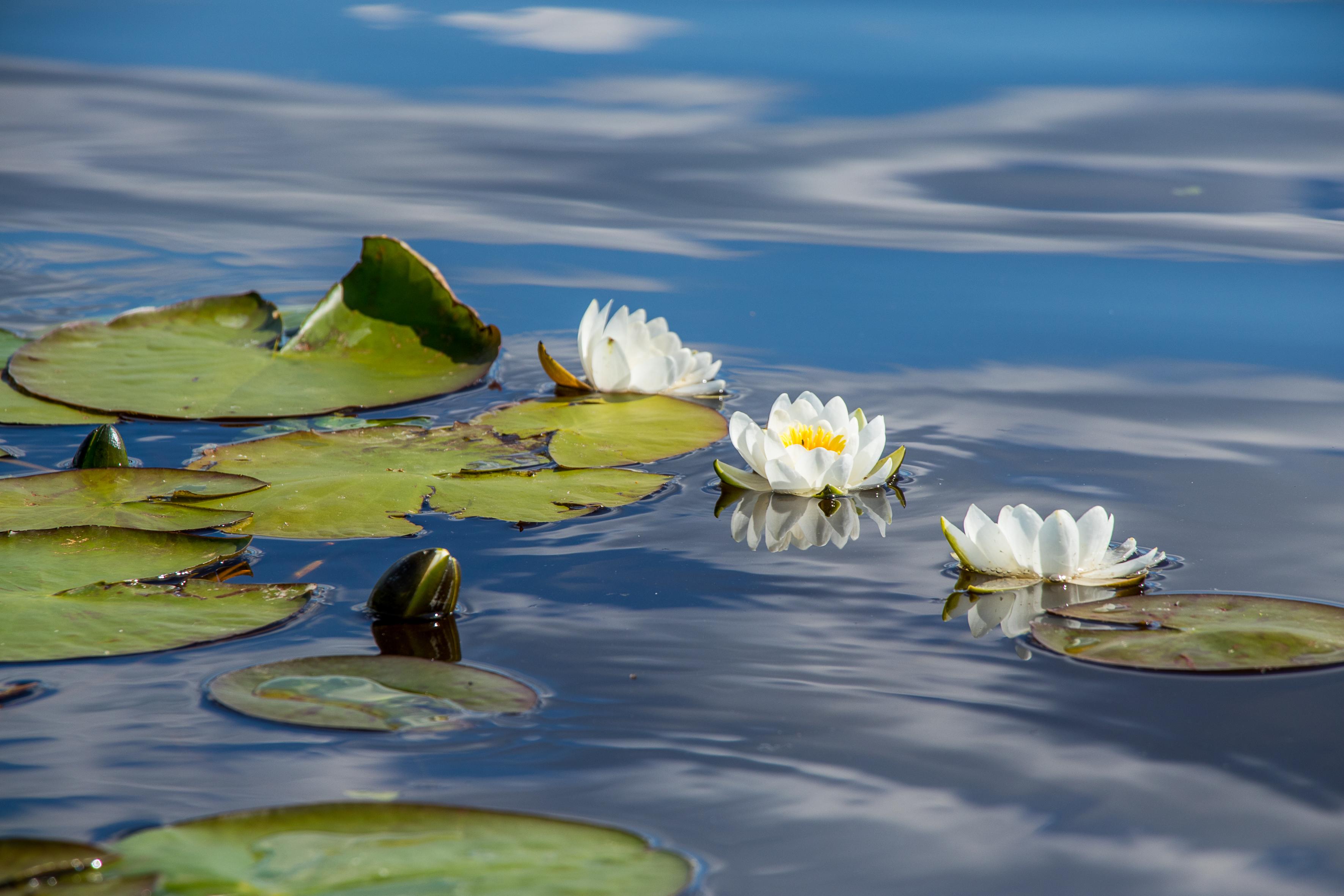<p>Блатото при село Малък Преславец&nbsp;- ще попаднете в истинското царство на водните лилии, ако посетите блатото край село Малък Преславец. Блатото е осеяно с множество бели водни лилии (Nymphaea alba), растение със статут на застрашен вид в Червената книга на България. Тук този вид е образувал колонии.</p>