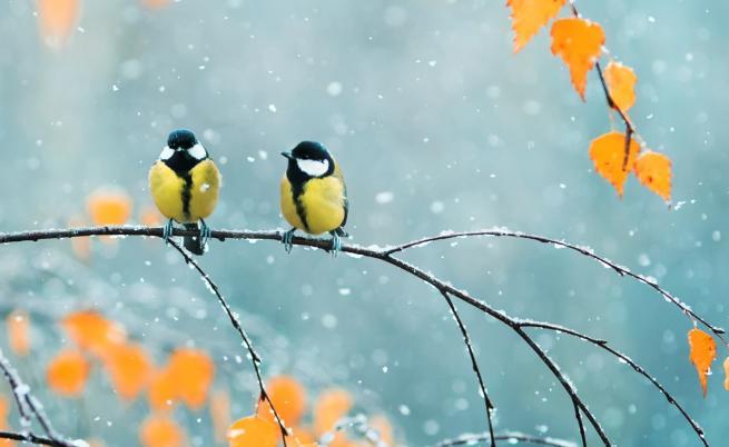 Зимата е на хоризонта, задава се първият сняг