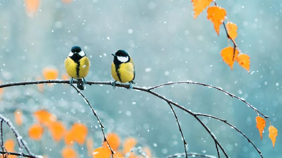 <p>Зимата е на хоризонта, задава се първият сняг</p>