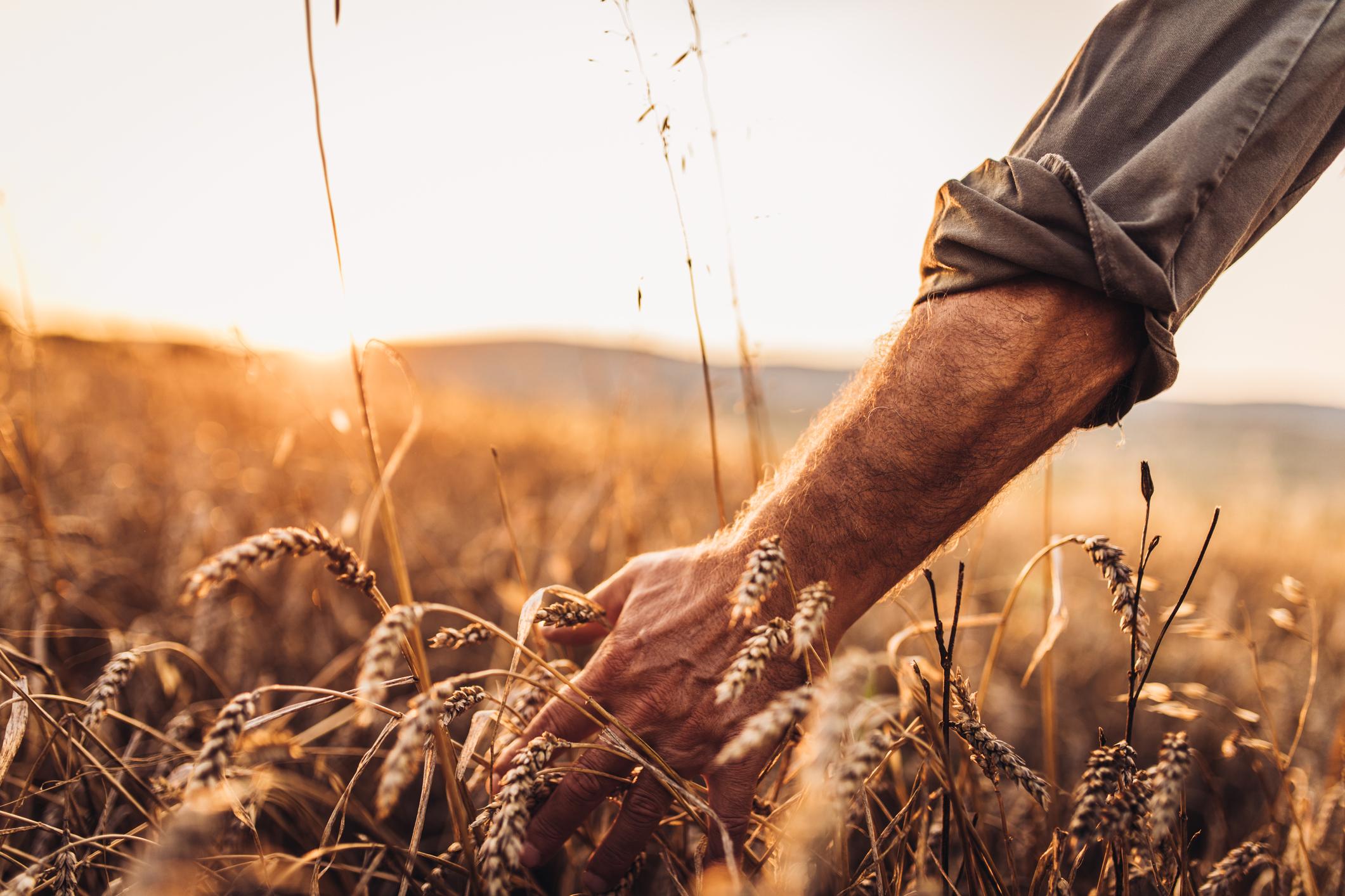 <p>В последния ден от ноември Православната църква почита паметта на св. Апостол Андрей Първозвани. За него се споменава в разказа за нахранването на народа с пет хляба. Българският народ отбелязва Андреевден като празник на семето (зърното).</p>