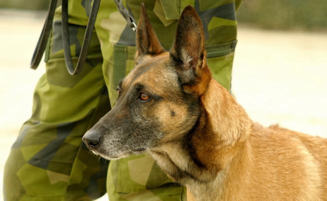 Вижте кучето, преследвало Багдади