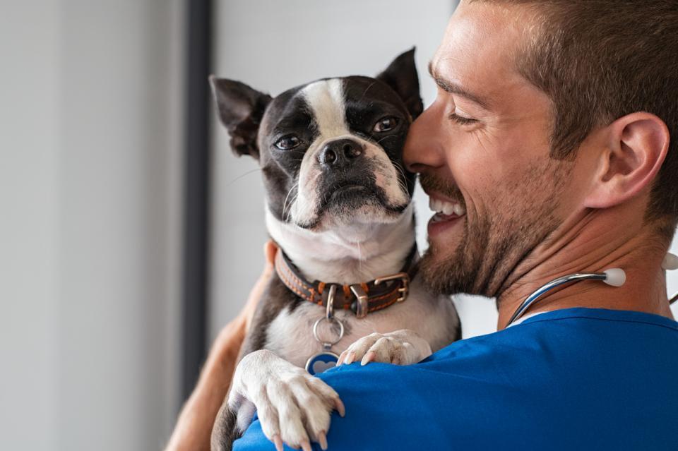 куче домашен любимец