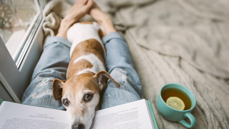 есен уют чаша чай кафе дом куче