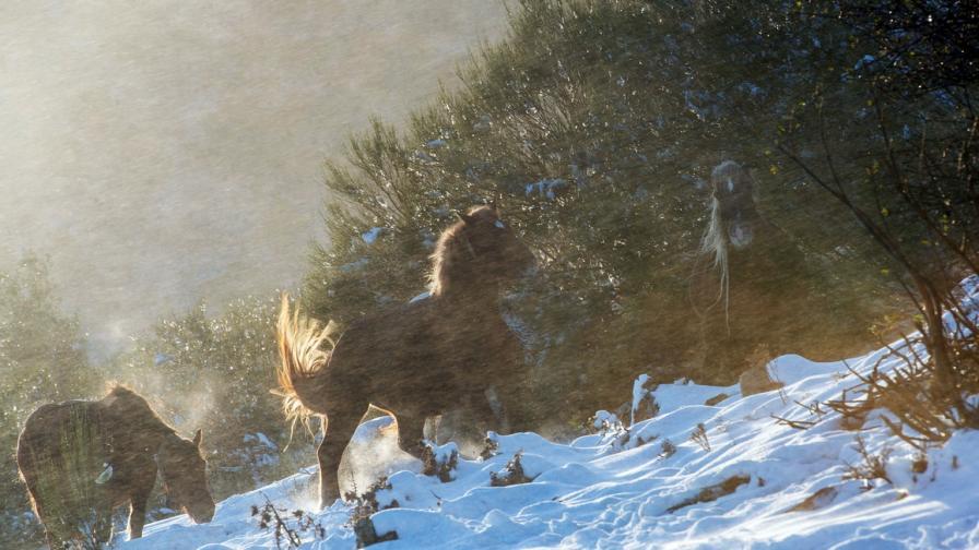 Първи сняг в Испания
