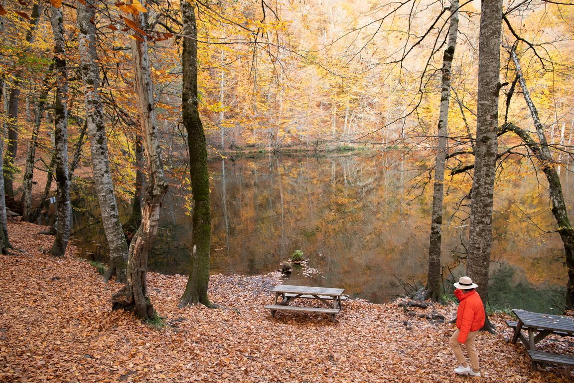 <p>Дивата природа в парка включва: елен, сърна, дива свиня, кафяви мечки, вълци, червена лисица, рис, видри и катерици. В резултат на по-добрите условия за защита в парка се увеличава популацията на животни.</p>