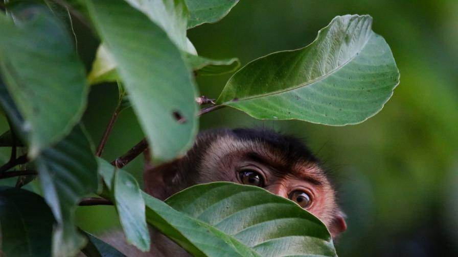 <p>Маймуни живеят като женени, ходят на ресторант, сърфират в интернет&nbsp;&nbsp;</p>