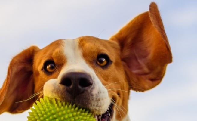 """""""Кучешки"""" хороскоп - какво означава зодията за домашния любимец"""