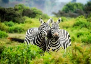 Ще преместят хиляди животни от национален парк в Зимбабве