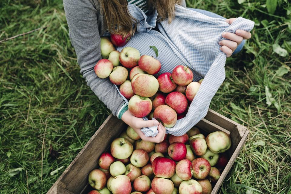 плодове храна грозде ябълка дюля дюли орехи круша