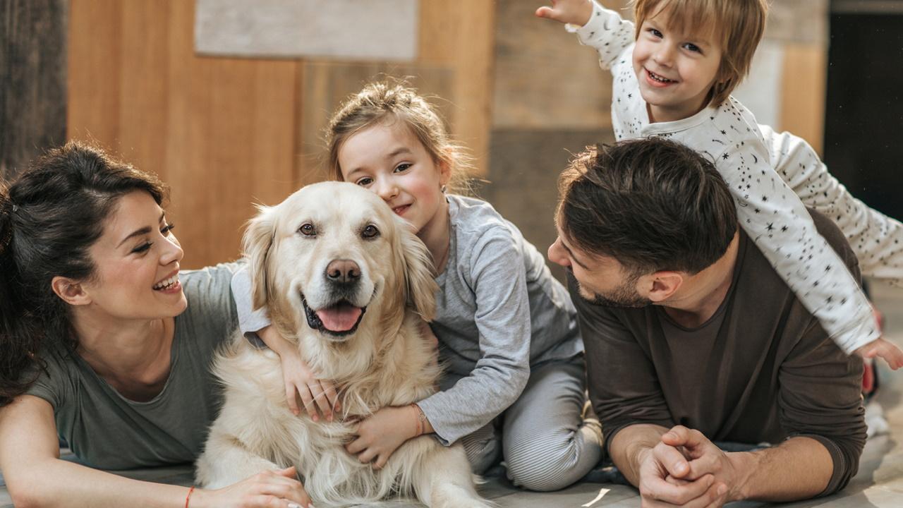 <p><strong>Попитайте собственика за разрешение</strong> - Друга често срещана грешка, която всички допускаме, когато &bdquo;срещаме&ldquo; ново куче, е да отидем и директно да започнем да галим или гушкаме кучето. Едно от първите неща преди да установите контакт с непознато куче, което трябва да направите, е да попитате стопанина. Това освен че е въпрос на учтивост, може да помогне и в случай, че кучето е агресивно или в случай, че трябва да подходим по определен начин.&nbsp;<br /> &nbsp;</p>