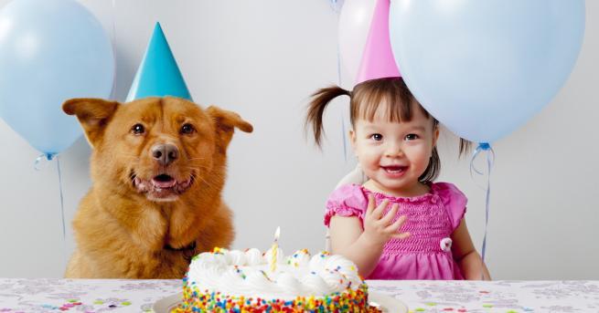 Любопитно Нова формула изчислява възрастта на кучетата в човешки години