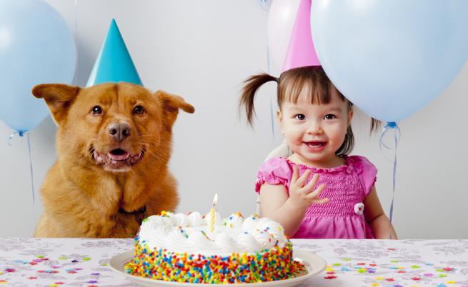 Нова формула изчислява възрастта на кучетата в човешки години