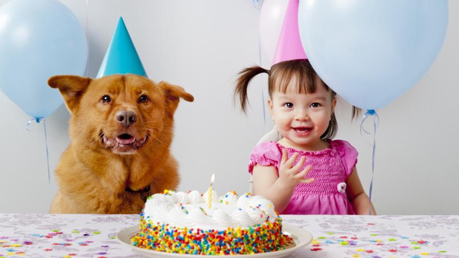 <p>Нова формула изчислява <strong>възрастта на кучетата в човешки години</strong></p>