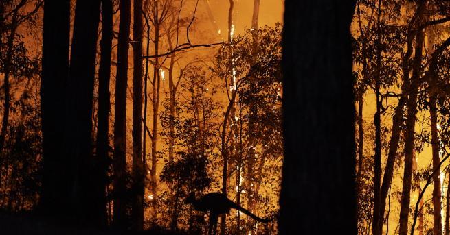 Любопитно Как смела жена спаси коала от пламъците в Австралия