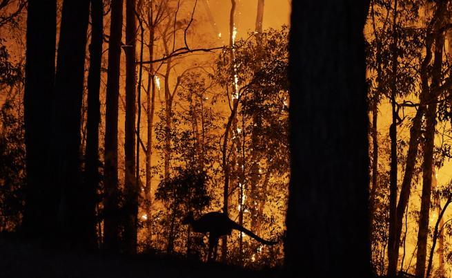 Жена рискува живота си, за да спаси коала от огъня (ВИДЕО)