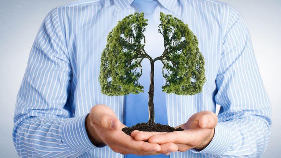 Пречистване на белия дроб с билки