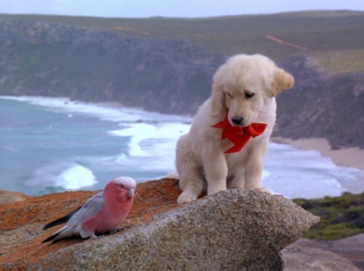 <p>&quot;Наполеон&quot; -&nbsp;Мъфин е малък голдън ретривър, който в собствените си очи е завоевател като Наполеон. Изпълненото с любопитство към живота кученце живее в далечната Австралия. То е ревнив защитник на своята територия, така както го е научила мама. Но всъщност е и бъдещ завоевател, готов да покори света и оцелее в най-трудните условия с помощта на крилатия си приятел Бирдо. Един ден Мъфин се озовава в кош, който прелита над морето. В този момент решава, че това е шансът му да изпълни мечтата си и да заживее с дивите кучета на свобода. След много приключения той успява да се върне при майка си, която обещава вече да го нарича Наполеон.&nbsp;&nbsp;</p>  <p><strong>&bdquo;Наполеон&ldquo;: 23 ноември, събота, 12.50 ч. по NOVA</strong></p>