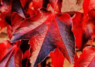 Как влияе есента според зодията