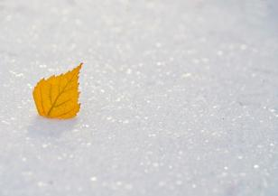 Световен ден на снега празнуваме на 20 януари