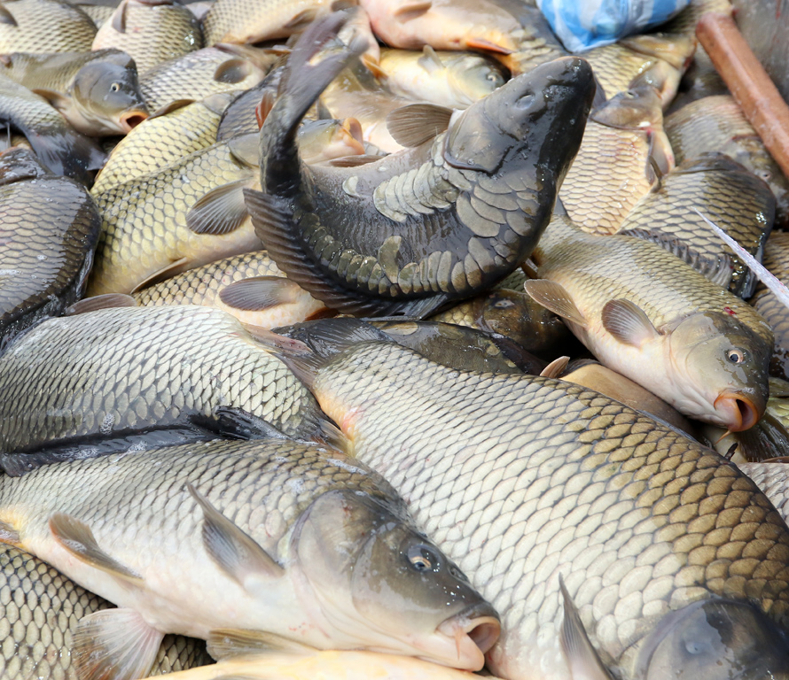 Изобилие от риба на Женския пазар