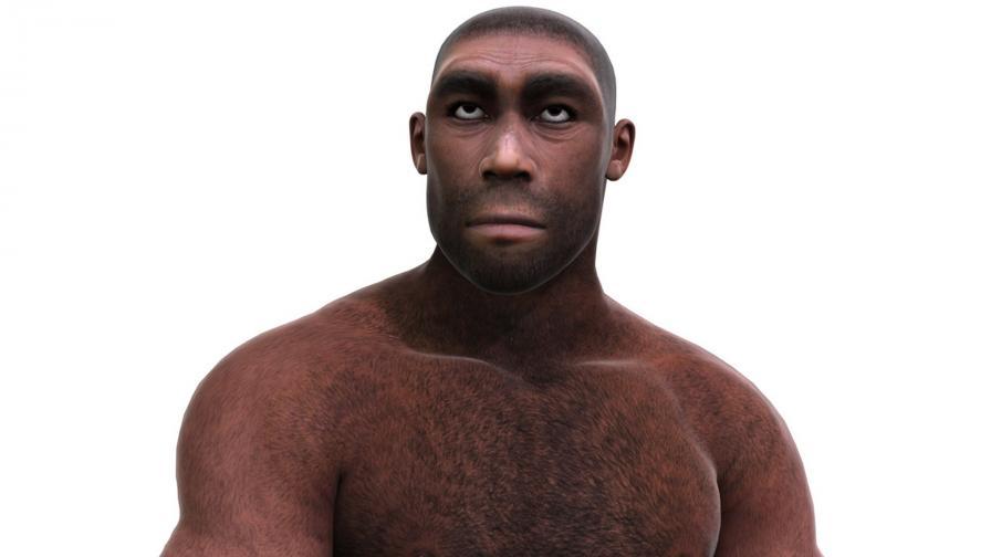 Хомо еректус - Изправен човек