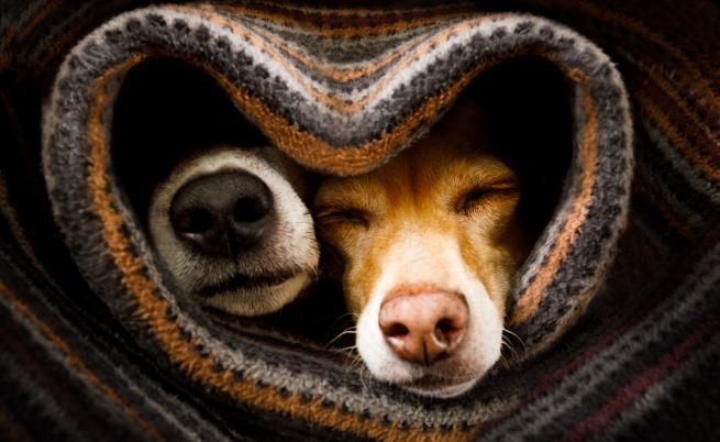 15 съвета, които ще ни помогнат да предпазим кучето си през зимата