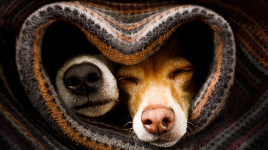 <p><strong>15 съвета</strong>, които ще ни помогнат да предпазим <strong>кучето си</strong> през зимата</p>