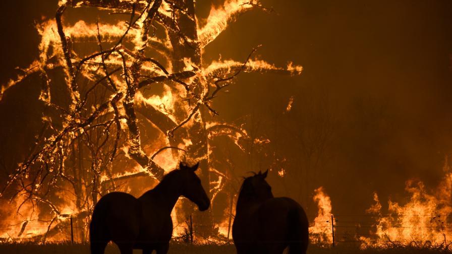 Над 1 милиард животни жертви на пожарите в Австралия