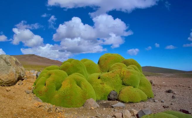 Това са най-старите живи организми на Земята