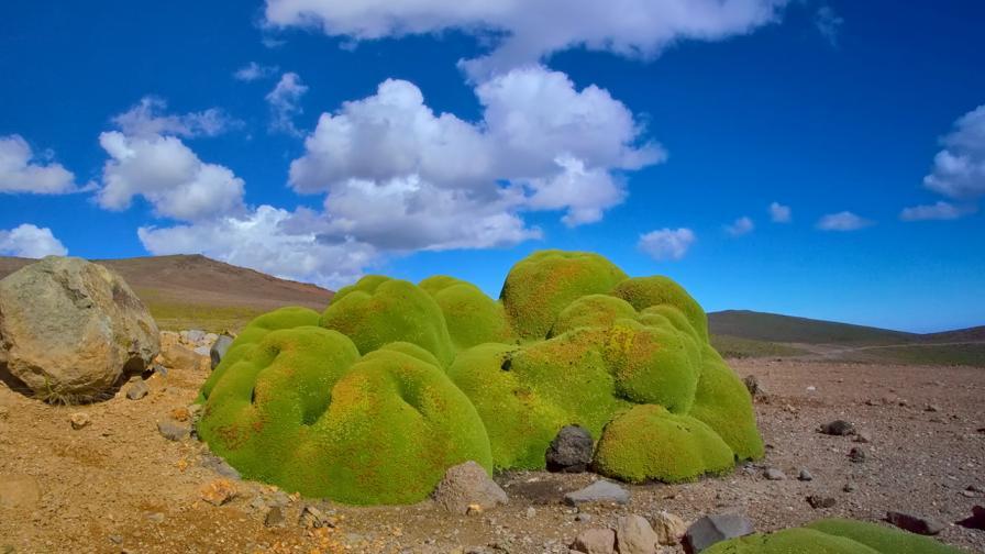<p>Това са <strong>най-старите живи</strong> организми на Земята</p>