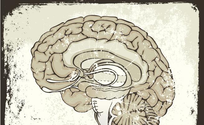 Тайната на един човешки мозък на 2600 г.