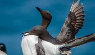 Учени: Топлинна вълна в Тихия океан е убила един милион животни - Свят   Vesti.bg