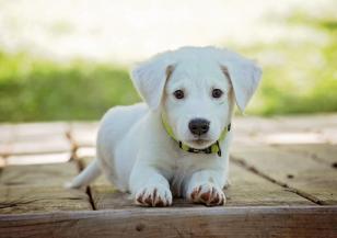 Роди се зелено кученце в САЩ