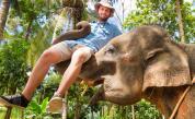 Хотел предлага бонус атракция – слон по стаите