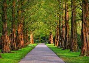 Спят ли дърветата